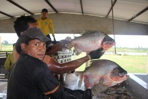 """<div class=""""mobile-hide""""></div> <div class=""""mobile""""><div class=""""desktop-hide""""><img src=""""https://obomja.com/portal/wp-content/uploads/2021/01/mobilehcnet.gif""""></div></div></br>Estudo mostra Bom Jardim como 4º maior produtor de peixe em cativeiro do Maranhão."""